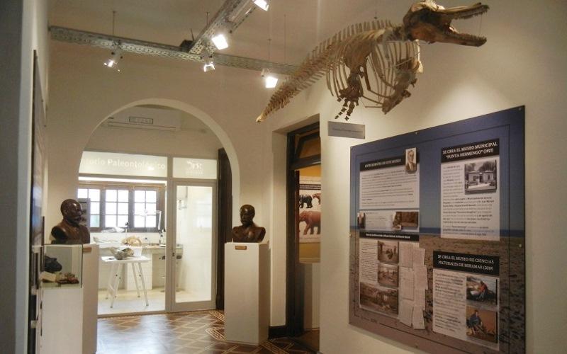 Fósiles en Miramar