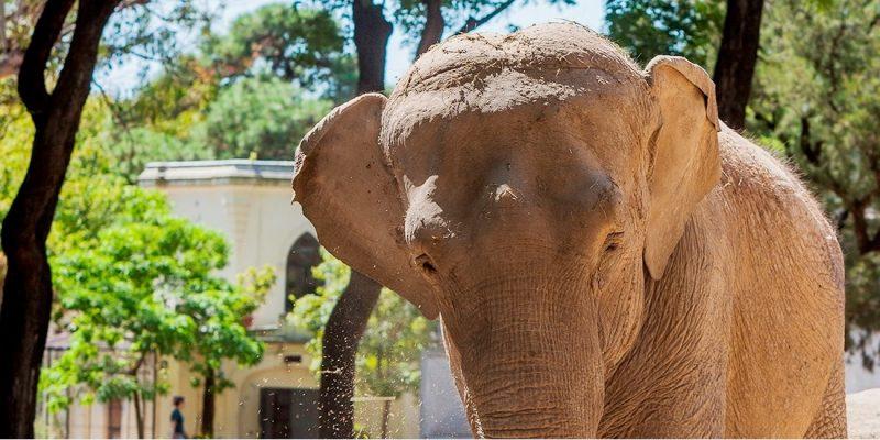 Elefanta Mara