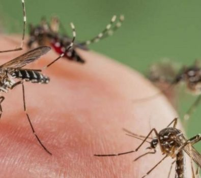Invasión de mosquitos en Bahía Blanca
