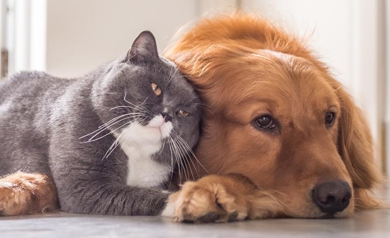 Rabia en mascotas