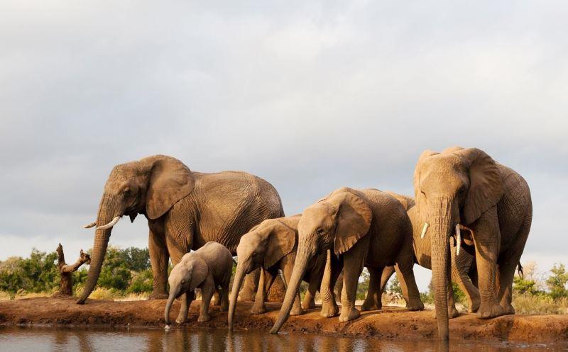 Documentales de elefantes